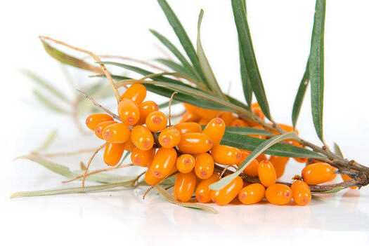 Seabuckthorn Oil from CAOH.com